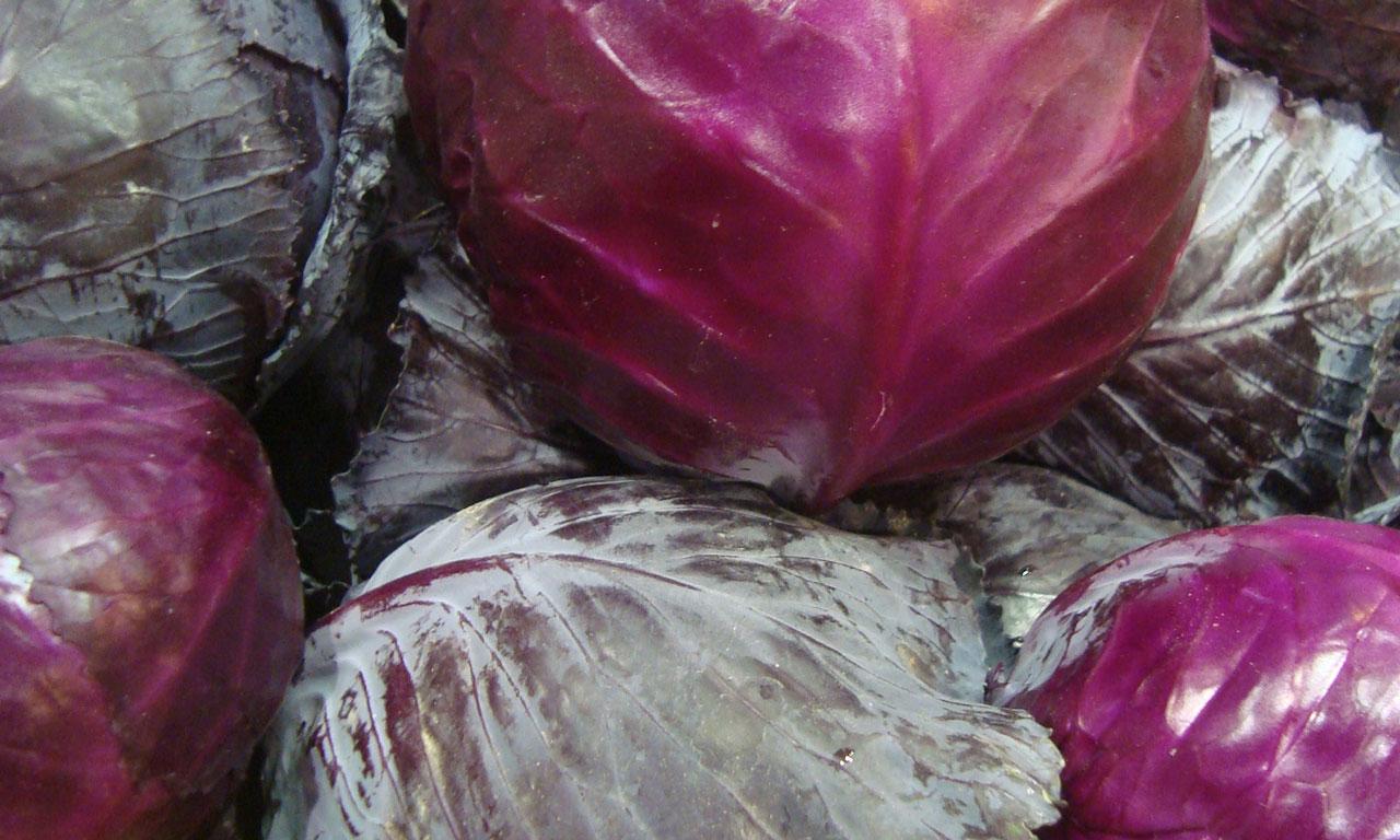 fresh-hk-cabbage